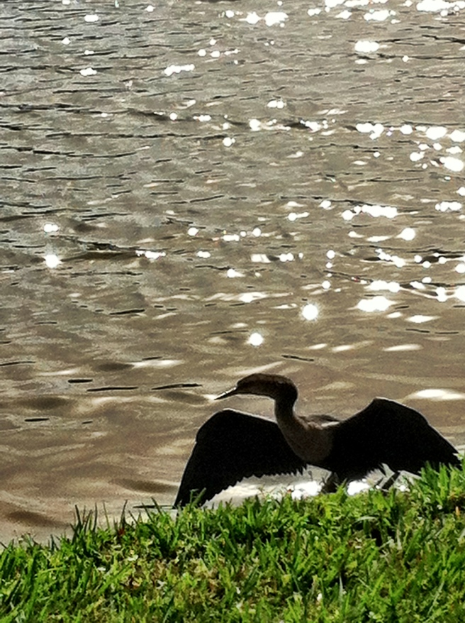 Heron guarding nest