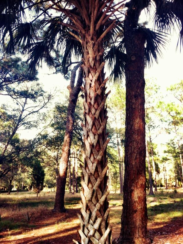 Lattice patterned palm